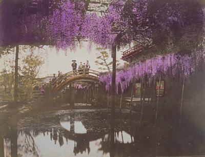 A wisteria trellis at Kameido Shrine_Kusakabe Kinbei
