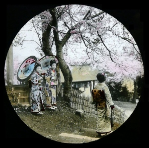 THREE GEISHA UNDER CHERRY BLOSSOMS