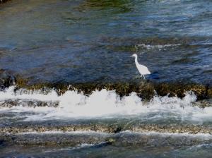 rio metoba una garza