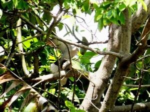 Palomas en el mango2