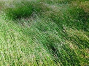 Hierbas en la pradera